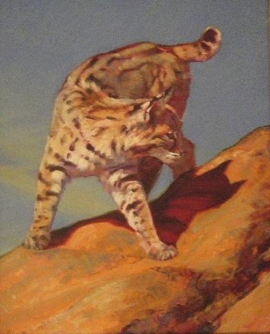 Switchback Cat