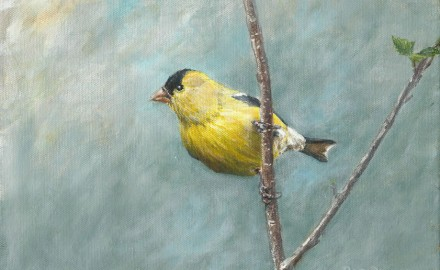 American Goldfinch (SOLD)