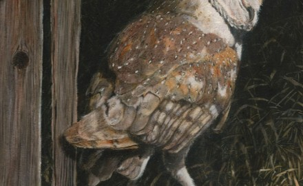 Barn Owl in the Old Barn (SOLD)