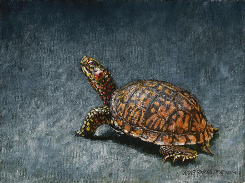 Eastern Box Turtle (SOLD)