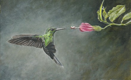 Striped-Tailed Hummingbird